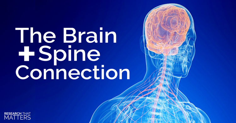 Brain and Spine Connection